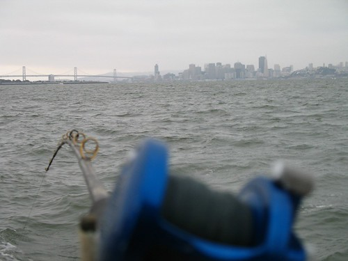 522651031 for Sf bay halibut fishing