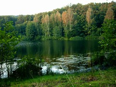 The Forest is the Teacher, Not the End Goal