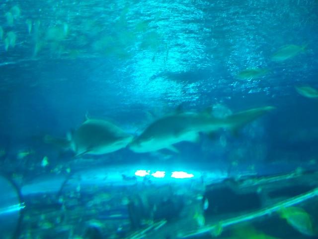 Ripley 39 S Aquarium Myrtle Beach Sc Spring Break 2007 29