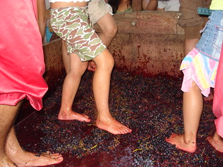 Making wine