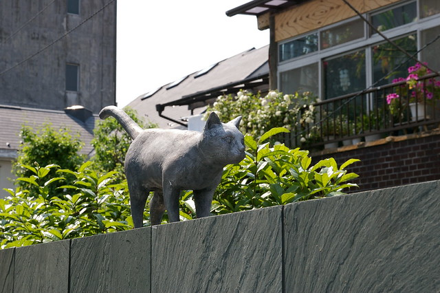Photo:Unmoving cat on the wall By:pelican