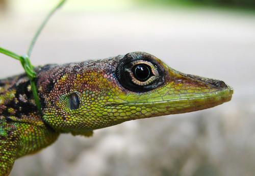 A lizard close up