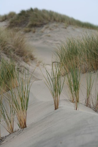 limantour, estero, estuary, point reyes, beach IMG_0446