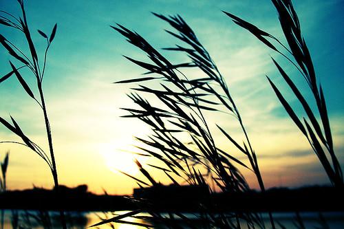 light sunset shadow sky plant river silouhette