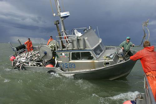 маломерные рыболовные катера