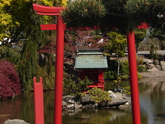 botanical garden, flower, tree, shinto shrine, shrine, torii,