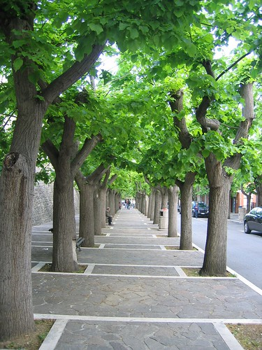 under the trees in Cellino may 1 07