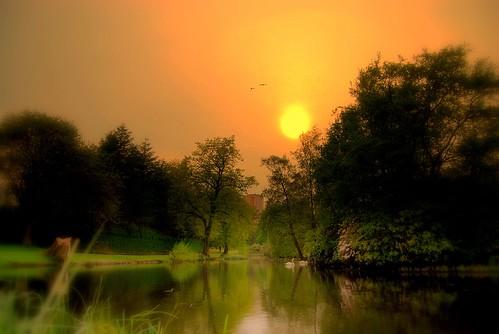 park wood sunset sun lake reflection tree green water birds scotland swan bravo glasgow scene challengeyouwinner abigfave colorphotoaward goldenphotographer 24hoursofflickr 24flickr 552007 tribehorizon