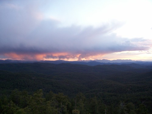 trees arizona pine forest fire strawberry woods az payson mogollonrim colcordlookout