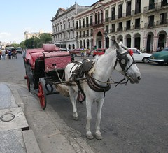 coachman(0.0), vehicle(1.0), pack animal(1.0), horse(1.0), horse harness(1.0), horse and buggy(1.0), land vehicle(1.0), carriage(1.0), cart(1.0),