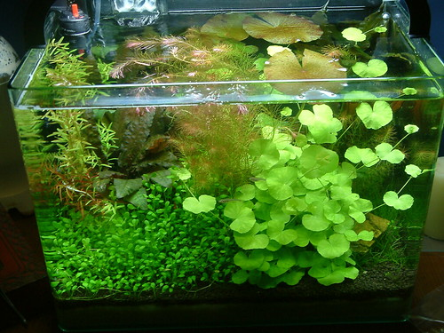 Acua on pinterest discus fish planted aquarium and for Co2 fish tank