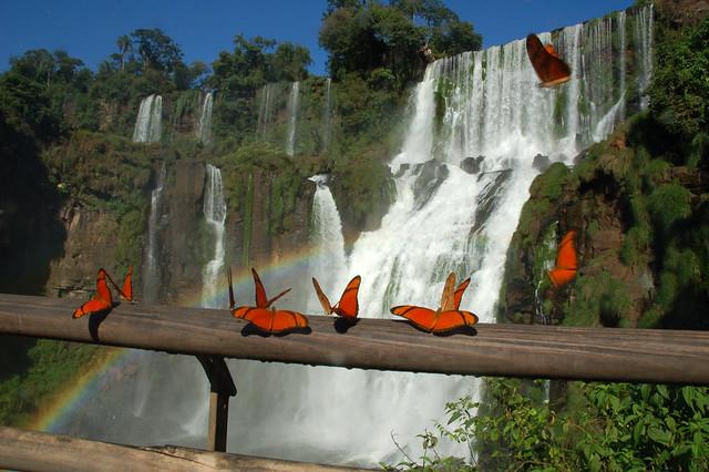 Butterflies At Iguazu Falls Flickr Photo Sharing