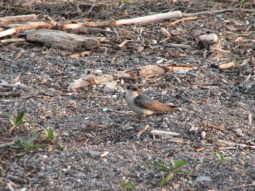 lake bird beach driftwood fingerlakes