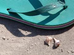 Flip-flop and seashells