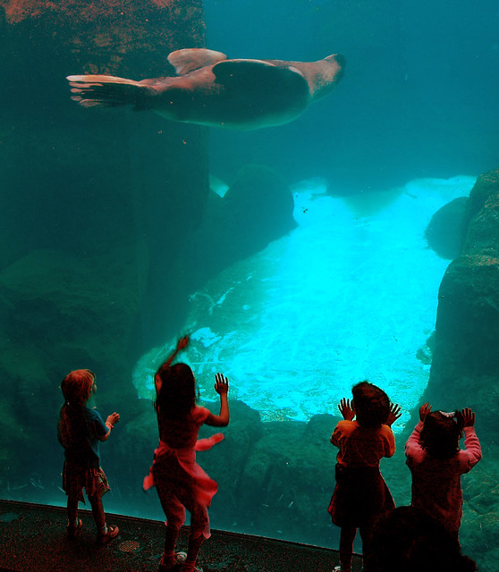 Portland Zoo Tank | Flickr - Photo Sharing!