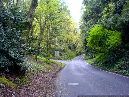 cornell road, springtime   DSC00103