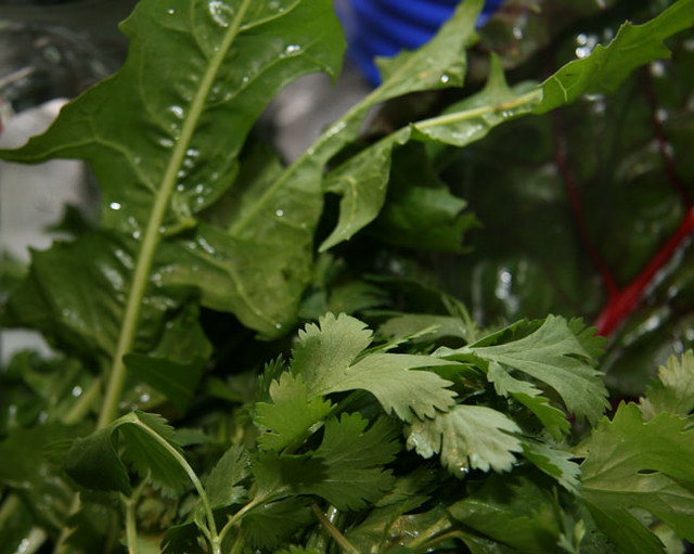 Leafy greens aid in weight loss and help reduce risk of cancer - Portland Nutrition Examiner.com