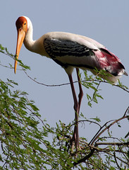 Vedantangal Bird Sanctuary