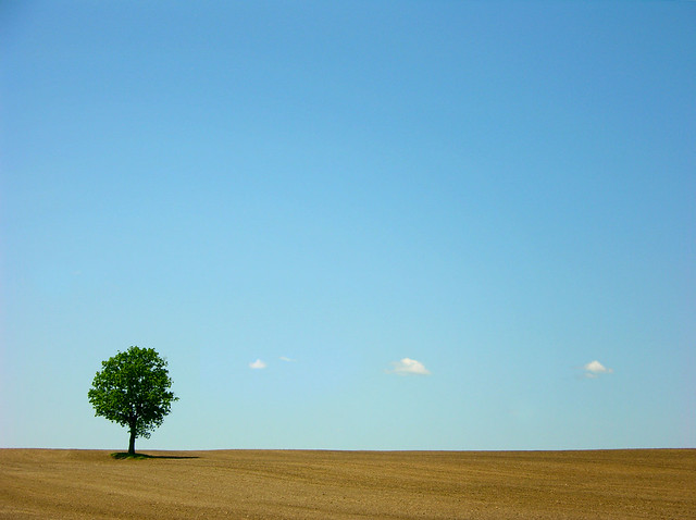 506599646 55c195f0b2 z [Pics] Flickr Spotlight – Lonely Trees