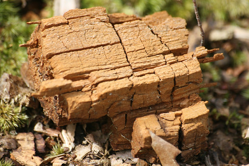 decaying wood