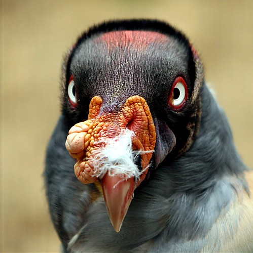 yeah...i KNOW i have something on my beak...little help please!!!