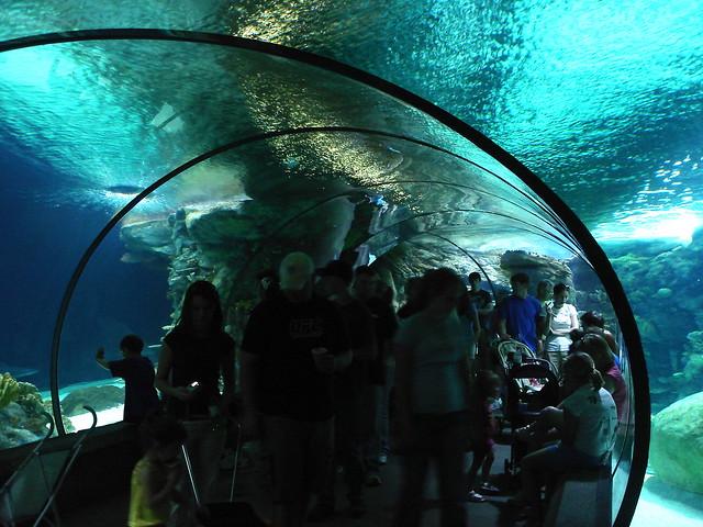 Zoo De Omaha Aquarium Tanque De Tiburones 4 Flickr
