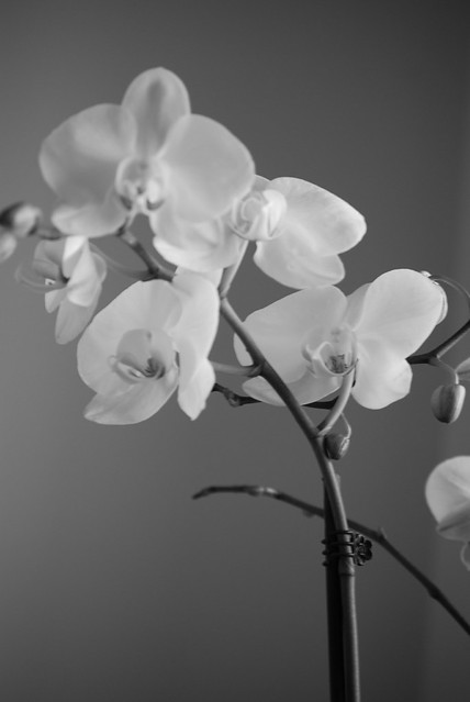 black and white orchid | Flickr - Photo Sharing!