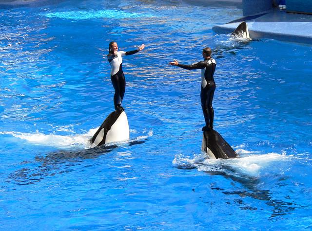 Orca Creative Group 115