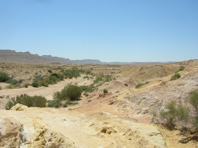 Unknown Plant and Geology, Large Makhtesh Crater, Negev Desert, Israel