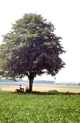 Lonely Tree 1983