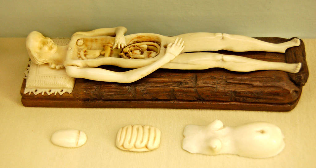 Ivory Anatomical Model at the Semmelweiss Medical Museum