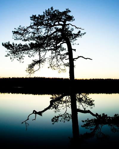 trip trees sunset sun tree water stone night canon evening spring europe sweden stones walk april sverige dalarna avesta victorsvensson lillsjön