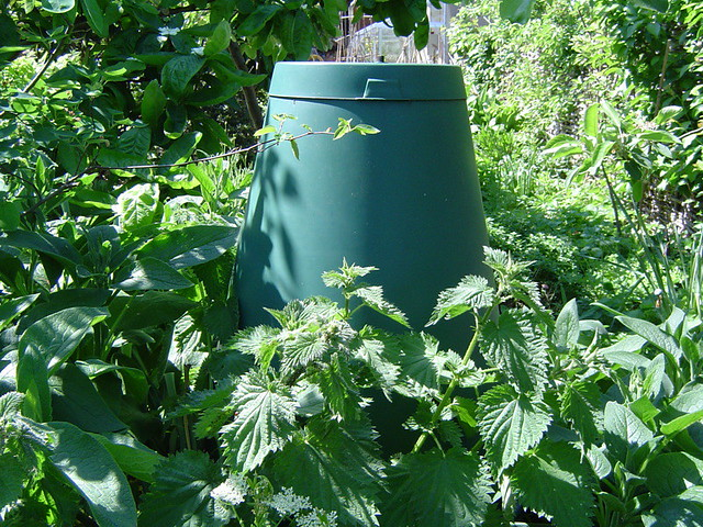 Green cone surrounded by nettles