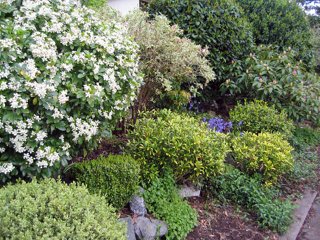 front yard shrubs flickr photo sharing. Black Bedroom Furniture Sets. Home Design Ideas