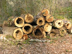 agriculture(0.0), logging(1.0), wood(1.0), tree(1.0), forest(1.0), trunk(1.0),