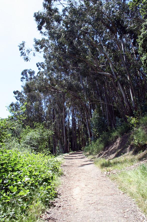Westwood Hills Nature Center Master Plan