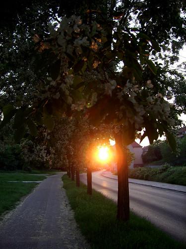 road sunset germany straße brandenburg ffo thebigone frankfurtoder