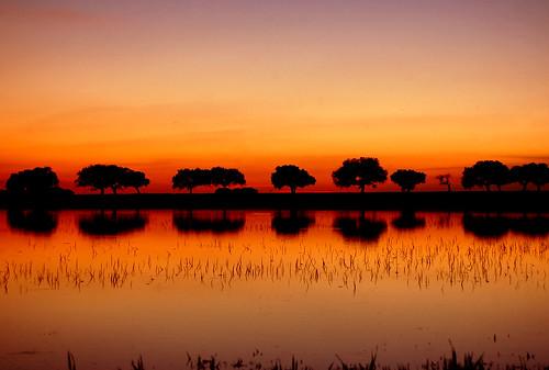 trees sunset red water sunrise d50 landscape arbol atardecer golden spain nikon reflects extremadura naturesfinest specnature mywinners abigfave impressedbeauty