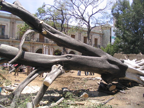 Oaxaca City Zócalo, May 2005