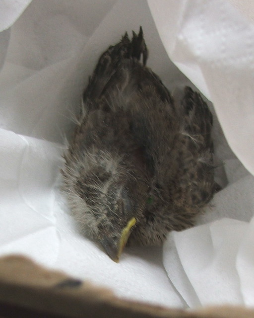 Baby Bird in the Make-Shift Nest...