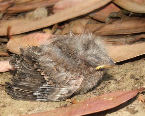 rescue a baby bird
