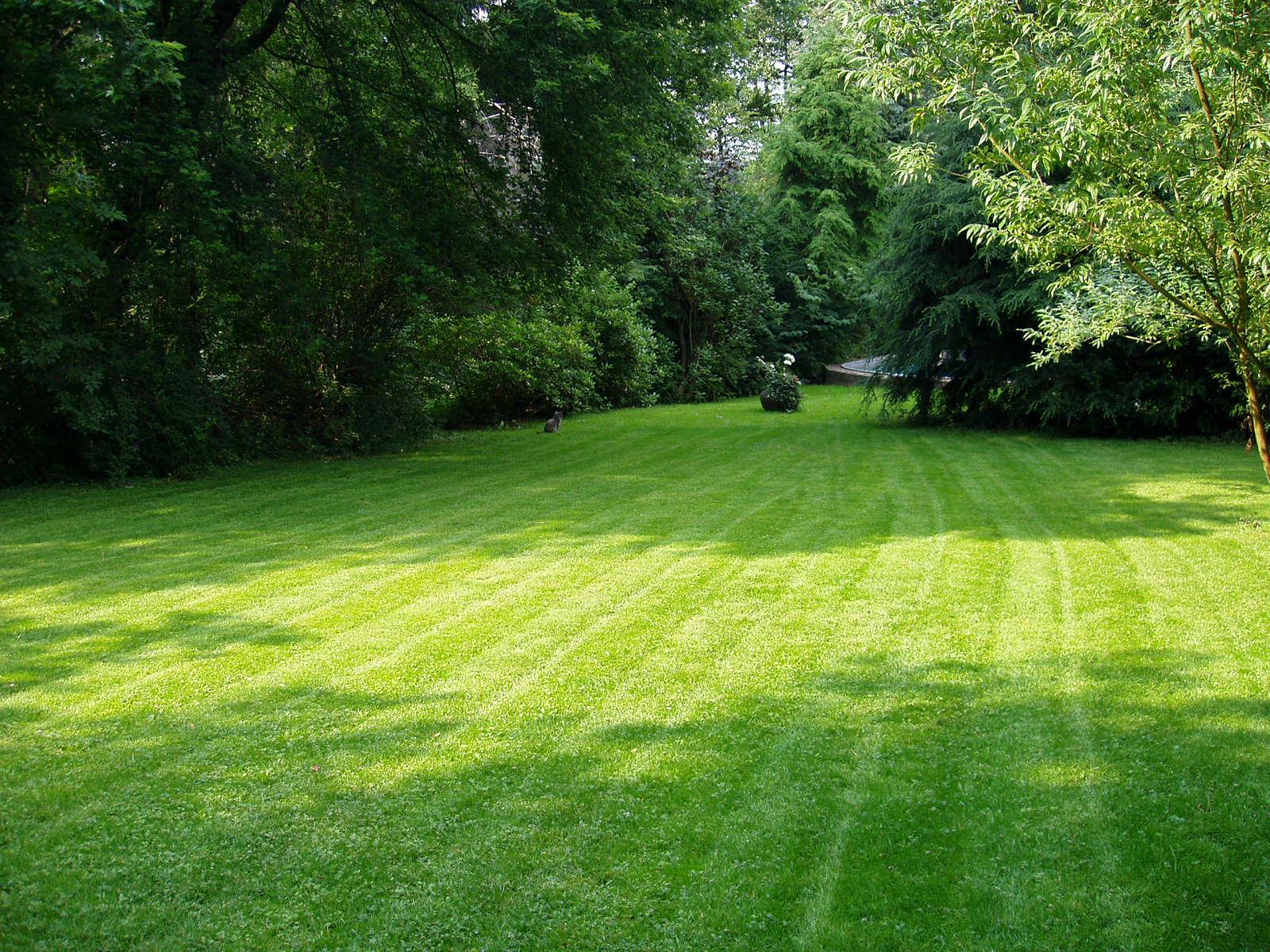 zakladanie trawnika kraków ogród łobzów