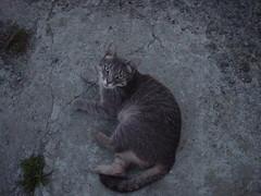 Daft Cat
