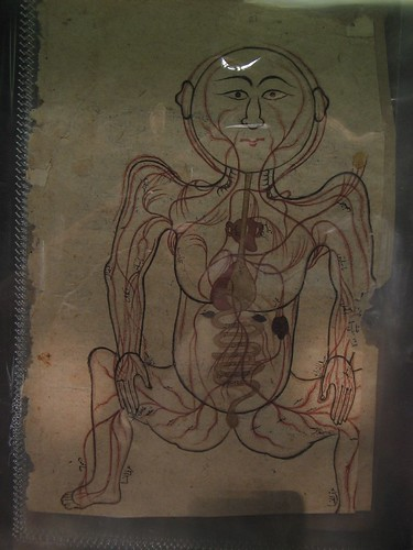 Persian Anatomy Drawing