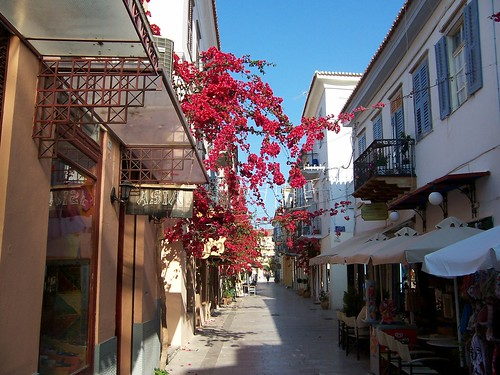 Bougainvillea growing happily in the streets of Greece.