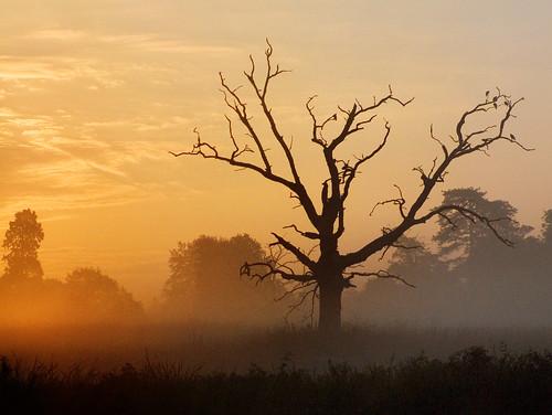 uk sun mist tree topf25 sunrise dead gold dawn golden buckinghamshire deadtree slough berkshire kevday langley langleycountrypark chtk
