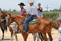 animal sports, rodeo, equestrianism, western riding, mare, equestrian sport, sports, pack animal, cowboy,
