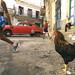 Havana 2003 by joaop