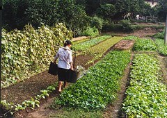 flower(0.0), garden(0.0), agriculture(1.0), shrub(1.0), farm(1.0), field(1.0), soil(1.0), gardener(1.0), produce(1.0), crop(1.0), plantation(1.0),