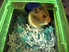 chipmunk(0.0), animal(1.0), rodent(1.0), pet(1.0), hamster(1.0), green(1.0), fauna(1.0), whiskers(1.0), gerbil(1.0),